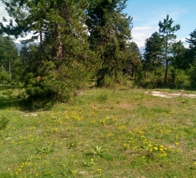 PBL1274 Forest land for sale