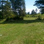 Forest land for sale