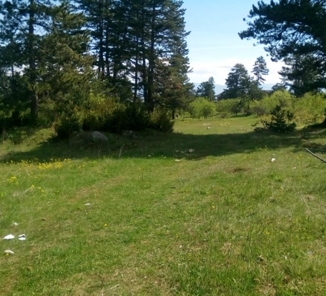 PBL1273 Forest land for sale