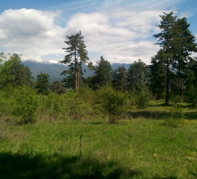 PBL1275 Forest land for sale